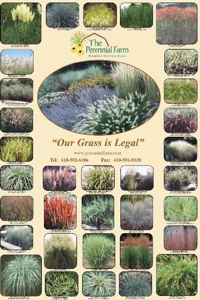 The highest quality best customer service fastest for Small ornamental grass varieties
