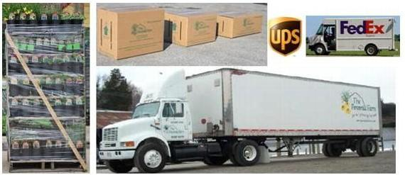 "More delivery choices - Our fleet of 16 trucks, One way racks, UPS, Fed Ex - We are ""The Delivery Specialists"""